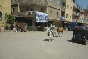 In the villages and towns heading south to Saqqara, donkeys and horses are modes of transportation.