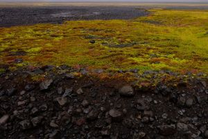 Colorful patchworks of earthy life intermittently carpet wide stretches of the valley.