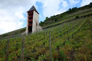 Ages-old vineyards blanket the steep hillsides of Bacharach.