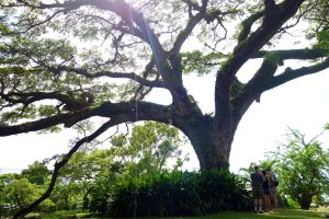 Rick, Andy, and Jackie take a moment to admire a lush and ancient tree on St. Kitts.